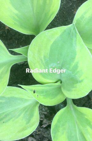Radiant Edger